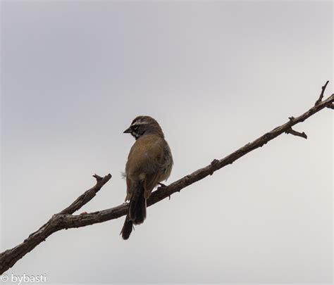 birds of western usa bybasti