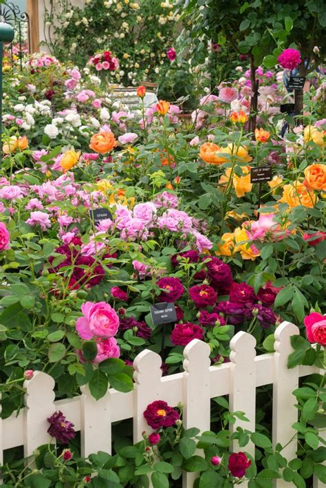 12529 Best Images About Flowers And Gardens On Pinterest