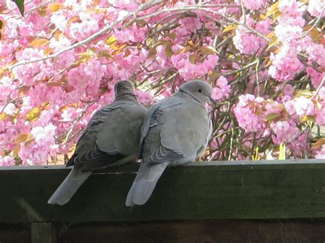Garden bird café is the place for love and war Tracy
