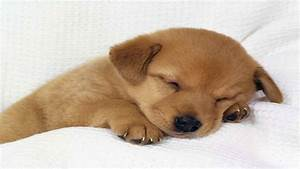 Hd Pictures Of Cute Baby Dogs Wallpapers Download ...