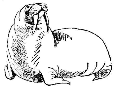 walrus coloring pages getcoloringpagescom