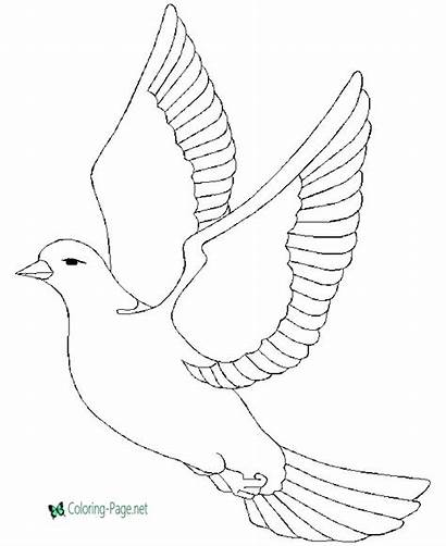 Dove Coloring Pages Birds Bird