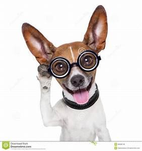 Dog Listening Stock Photography - Image: 36986742