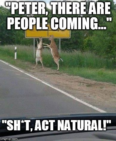 Nature Memes - 40 funny nature meme pictures that will make you laugh