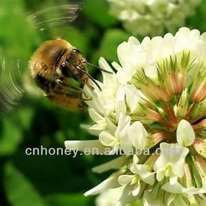 organic natural pure clover honey products,China organic ...