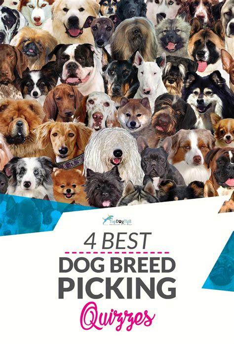 Best Quiz Best Breed Quiz To Help You Choose Your Next Pup Top