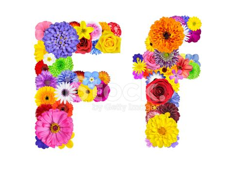 Flower Alphabet Isolated On White Letter F Stock Photos