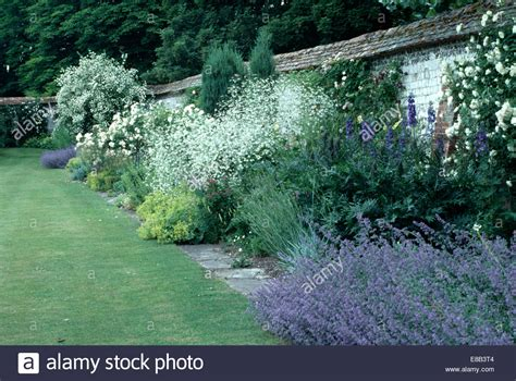 lavender border garden blue lavender and white crambe in herbaceous border beside wide grass stock photo royalty free