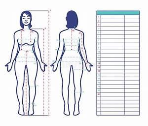 Woman Body Diagram Stock Illustrations  U2013 1 866 Woman Body