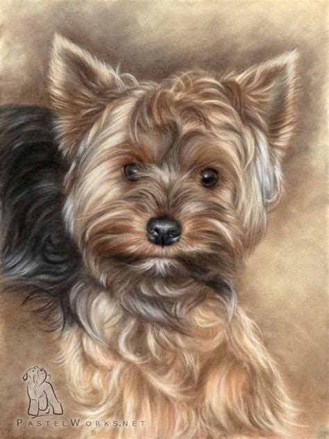 yorkshire terrier drawing pet portraits animal art