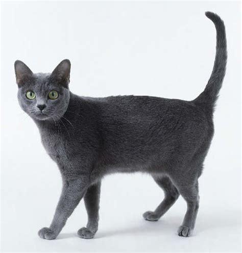 5 ท็อปสายพันธ์แมวยอดนิยมของคนไทย ที่น่าเลี้ยง - ประวัติแมว ...