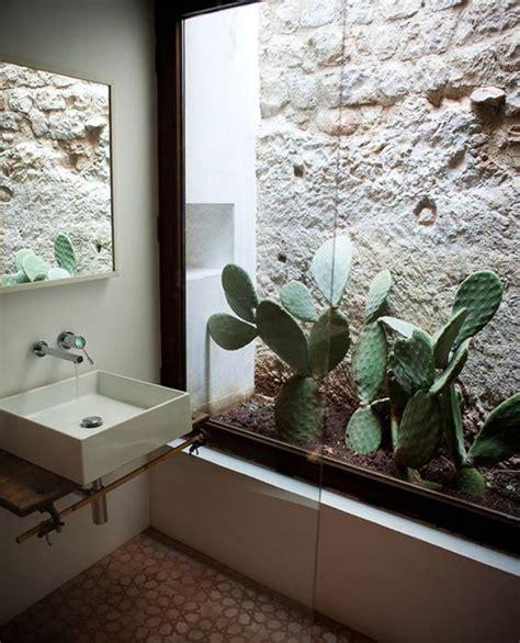 plante salle de bain sans lumiere d 233 corez avec les plantes grasses d int 233 rieur