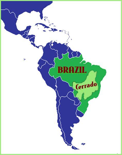 Café do Brasil Cerrado   3rd Wave Coffee Roasters: Saint Augustine's Premier Local Coffee Roaster