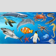 Learn Sea Animals + Water Animals Names And Sounds For Kids Youtube