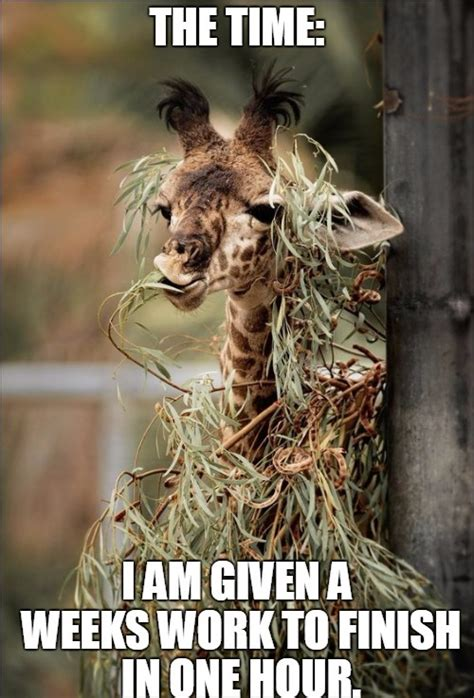 Meme Giraffe - office works memes funnyanimalmemes created with funny pictures of giraffe memes funny