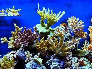 Alga Diatomea  Usos  Propiedades Y Mucho Mas Sobre Esta