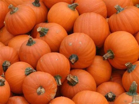 Halloween Stencils For Pumpkins canadian freebie free pumpkin stencils from mars