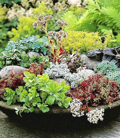 Garten Pflanzen Kaufen by Winterharte Sedum Mischung Garden Winterhart