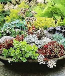 Winterharte Pflanzen Für Balkon : winterharte sedum mischung garden pinterest ~ Michelbontemps.com Haus und Dekorationen