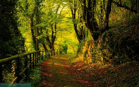 pretty forest download centre download free beautiful forest wallpaper for desktop