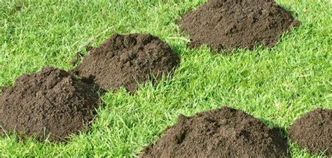 Maulwurf Im Garten 22 Einfache Tipps Zur Maulwurfbekämpfung