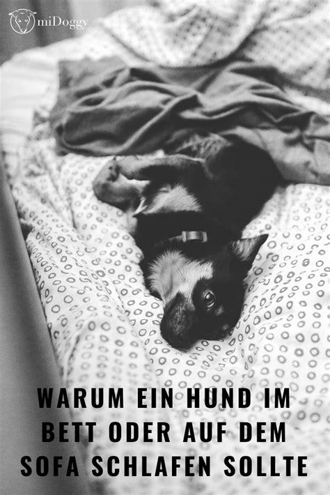 Glueckliche Haustiere Sauberkeit Und Erziehung by Darf Der Hund Ins Bett Oder Auf Das Sofa Gedanken Zu