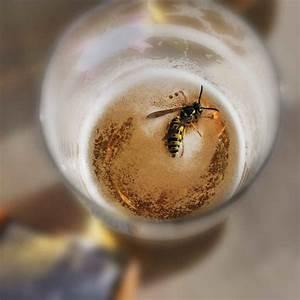 Was Tun Gegen Wespen Im Kirschlorbeer : was du mit wespen tun kannst und besser bleiben l sst ~ Lizthompson.info Haus und Dekorationen