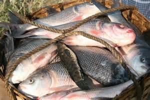 Indian Lake Fish