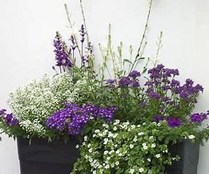 Blumenkästen Bepflanzen Ideen : eingangsbereich in blau wei gestalten balkonk sten pinterest balkon pflanzen balkon und ~ Eleganceandgraceweddings.com Haus und Dekorationen