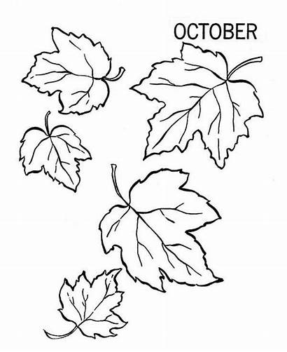 Coloring Leaves Fall Autumn Pages Leaf Drawing
