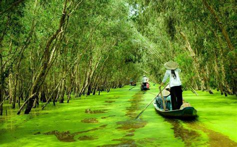 beauty  tra su cajuput forest saigon onlinenet