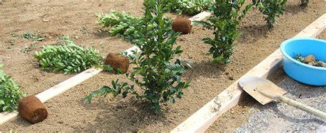 長ネギ の 植え 方