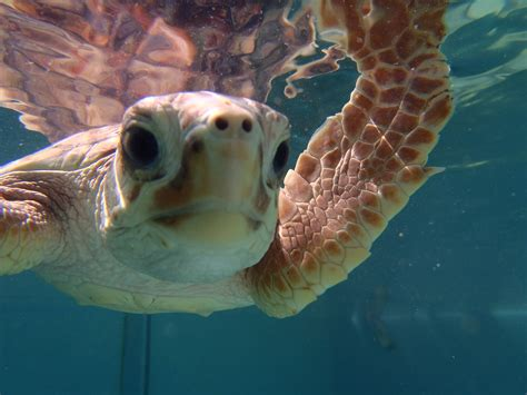 happy birthday images  turtles happy birthday images