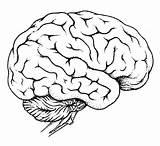 Human Coloring Organs Pages Brain Printable Worksheet Getcolorings Print sketch template