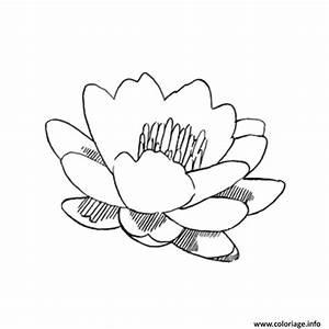 Dessin Fleurs De Lotus : coloriage fleur de lotus dessin ~ Dode.kayakingforconservation.com Idées de Décoration