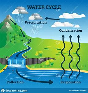 Water Cycle Vector Illustration  Labeled Earth Hydrologic