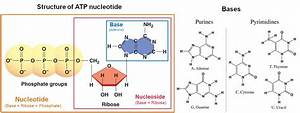 Nucleotides For Life Science