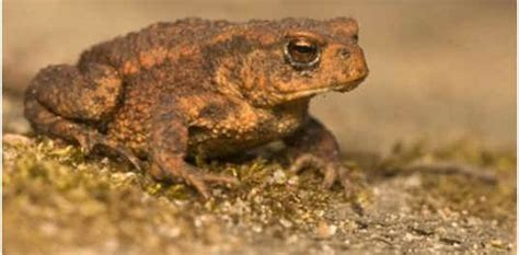 frogs poisonous  dogs sophisticated edge