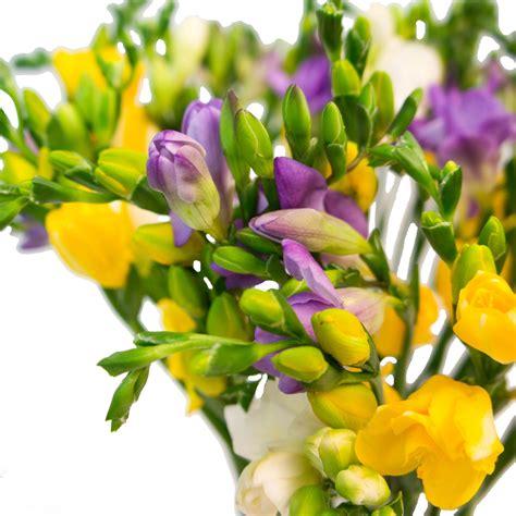 Frēzijas šis ir pušķis no svaigiem grieztiem ziediem ...