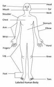 Ozna U010deny Human Body Diagram