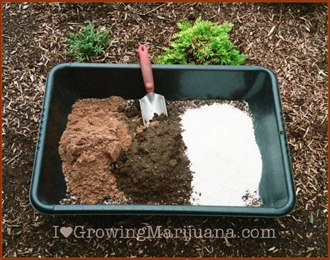 What Is The Best Soil For Growing Marijuana?