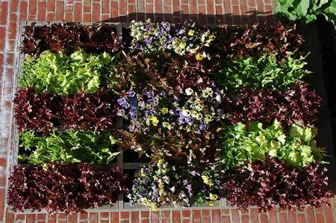 Vertical Garden Lettuce by 1000 Images About Living Wall Systems Vertical Gardens