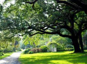 shedding light on trees and clueless growing a greener world