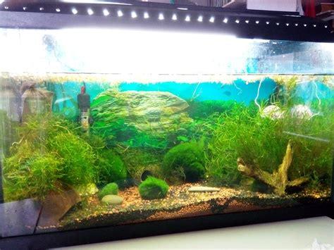 je cherche travail menage bureau aquarium materiel 28 images aquarium 54l avec tout le
