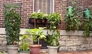 Hortensien überwintern Im Keller : balkonpflanzen richtig berwintern im haus ~ Lizthompson.info Haus und Dekorationen