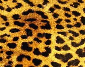Leopard skin texture Stock Photo Colourbox