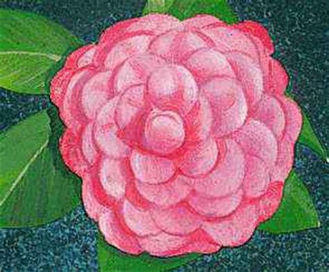 camellia kids encyclopedia childrens homework