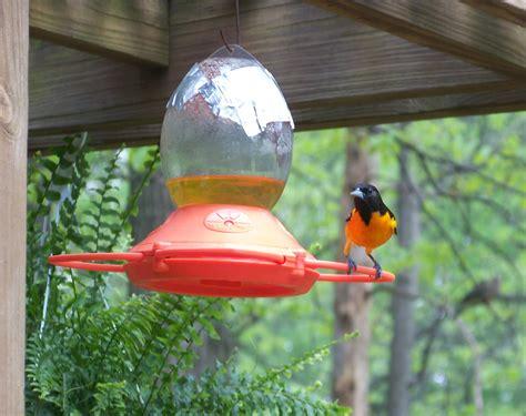 birds karens chatt
