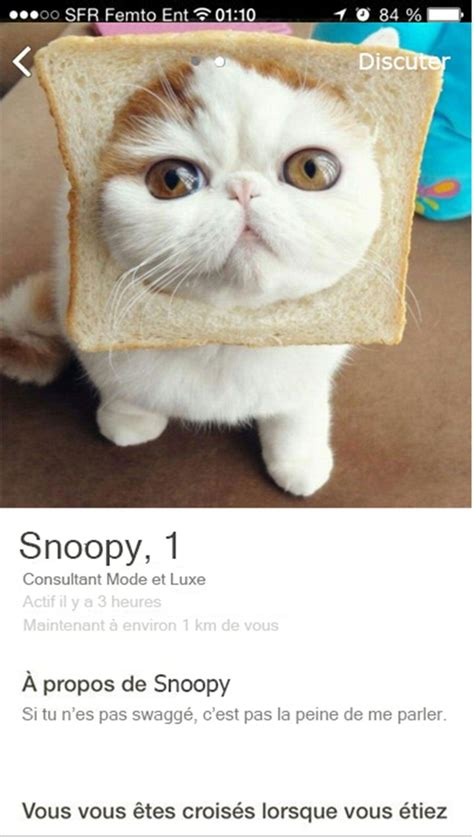 9 Best Lolcats Business Images On Pinterest Kitty Cats