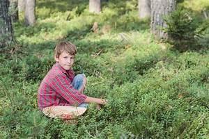 Wann Heidelbeeren Pflanzen : waldheidelbeeren pflanzen das sollten sie beachten ~ Orissabook.com Haus und Dekorationen